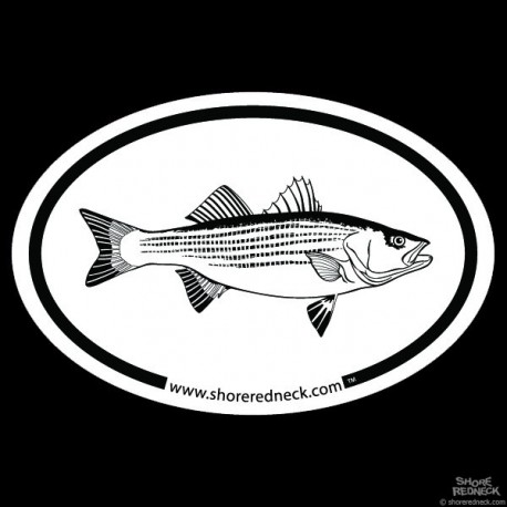 Shore Redneck Striped Bass Sketch Oval