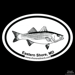 Shore Redneck Striped Bass Sketch Eastern Shore MD Oval